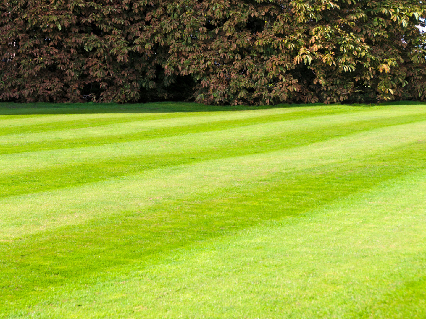 Turn to us when you need lawn care services based in Otisville, Davison, MI and serving the surrounding areas